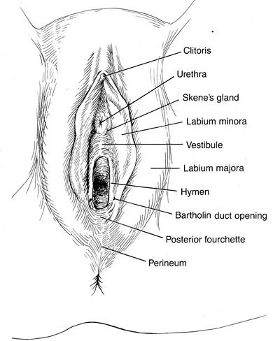 vulva.jpg